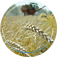 Агрохолдинги, агрофирмы, фермерству